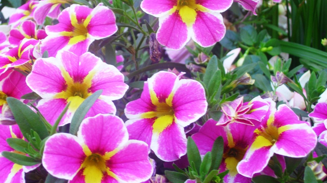 "Collier "" Blütentraum "", Nr. 1"